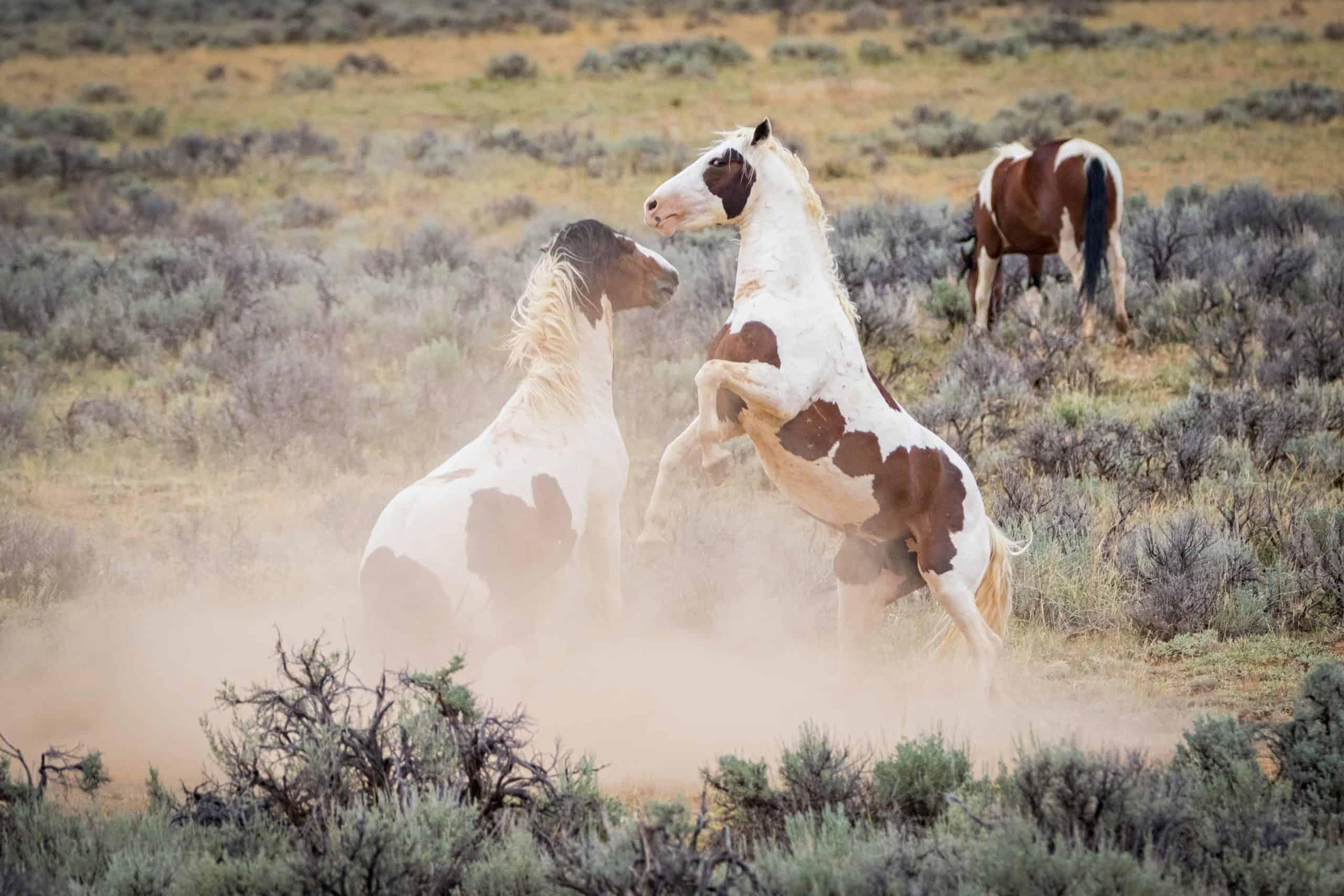 where do wild horses live