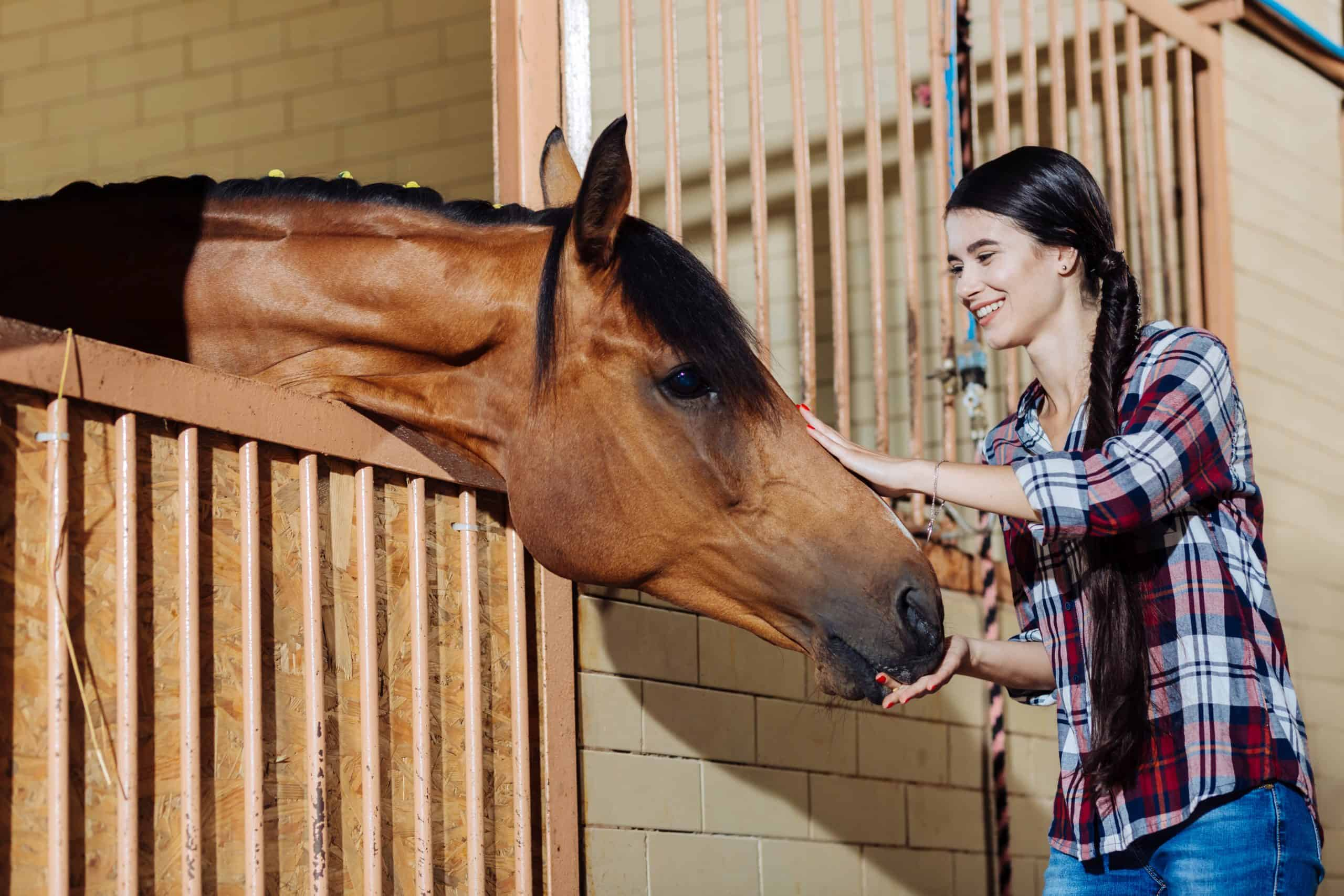 Young horsewoman. Young appealing dark-haired horsewoman standing in stable and petting dark horse