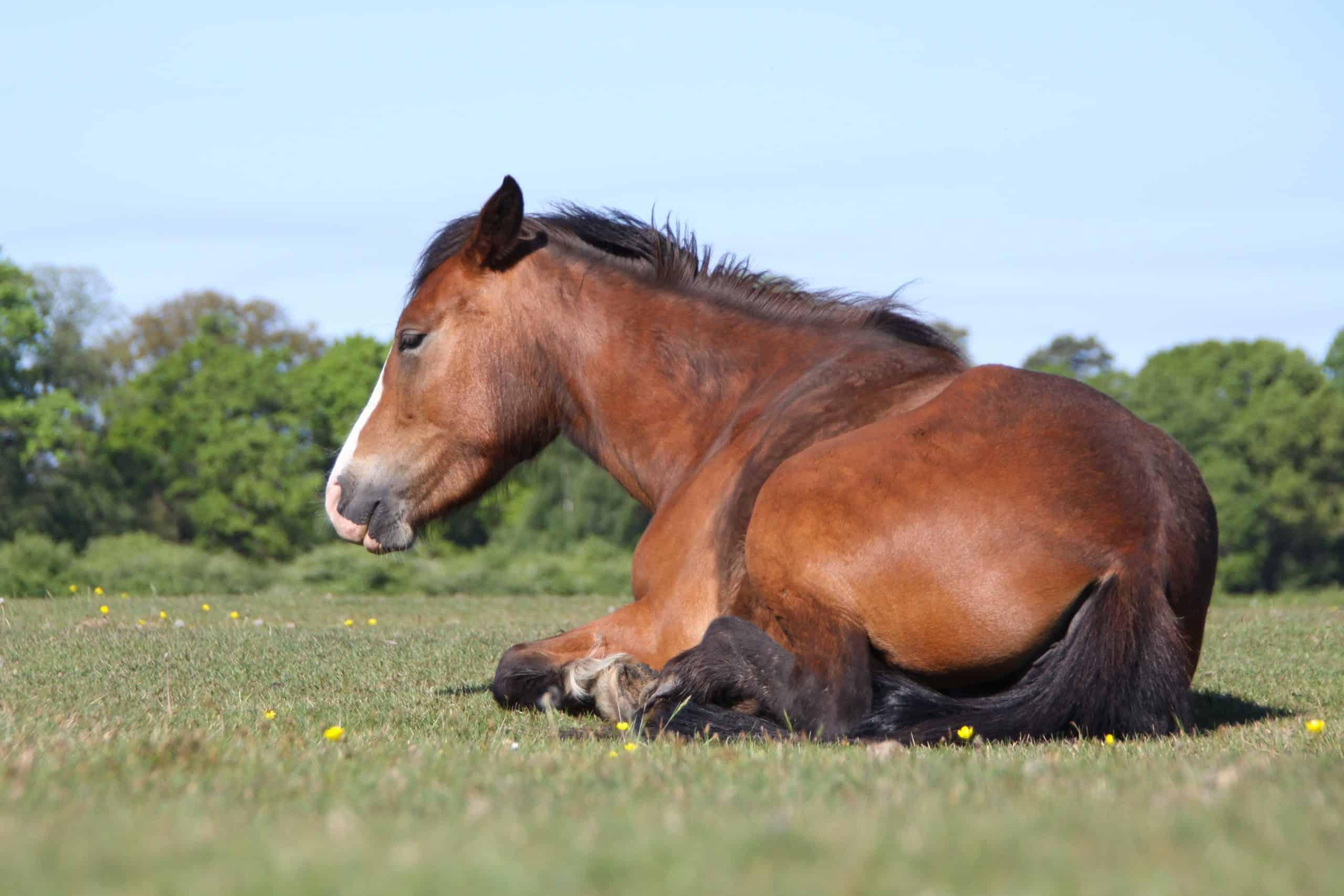 a horse sitting