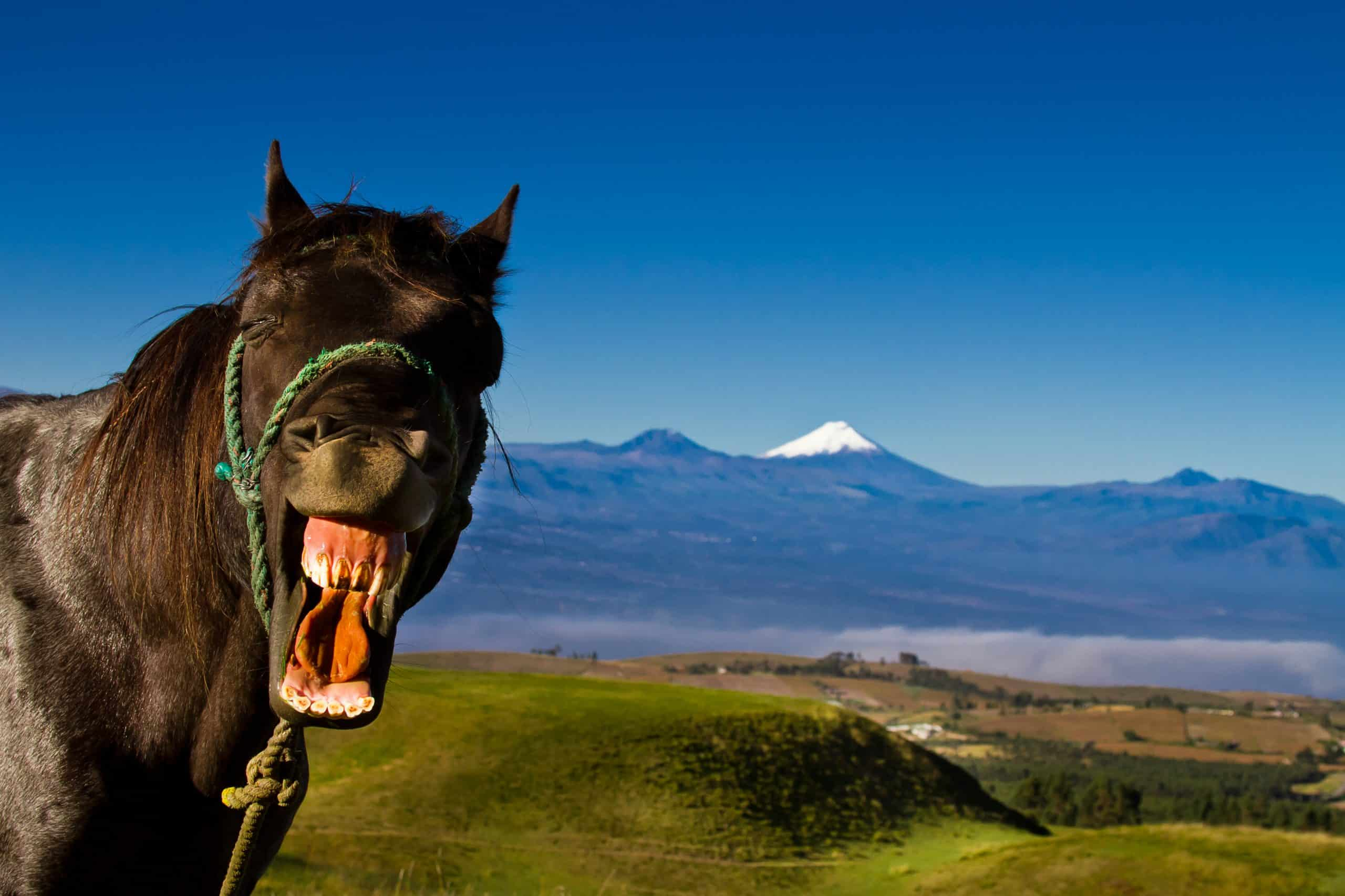 our favorite horse jokes