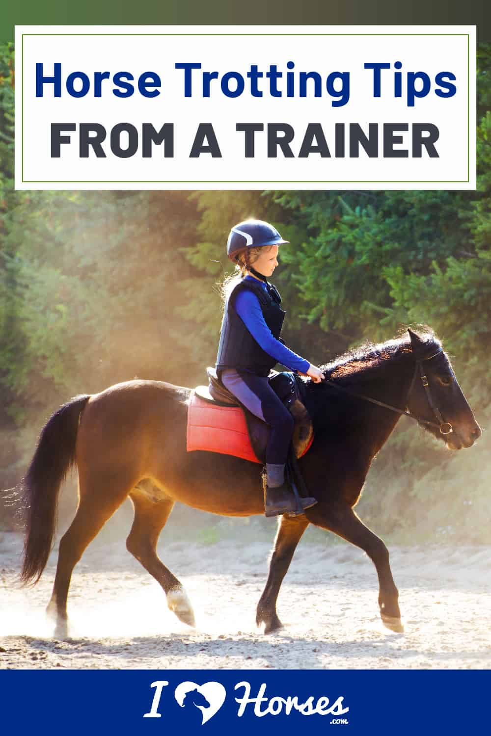 Horse Trotting Tips From A Trainer