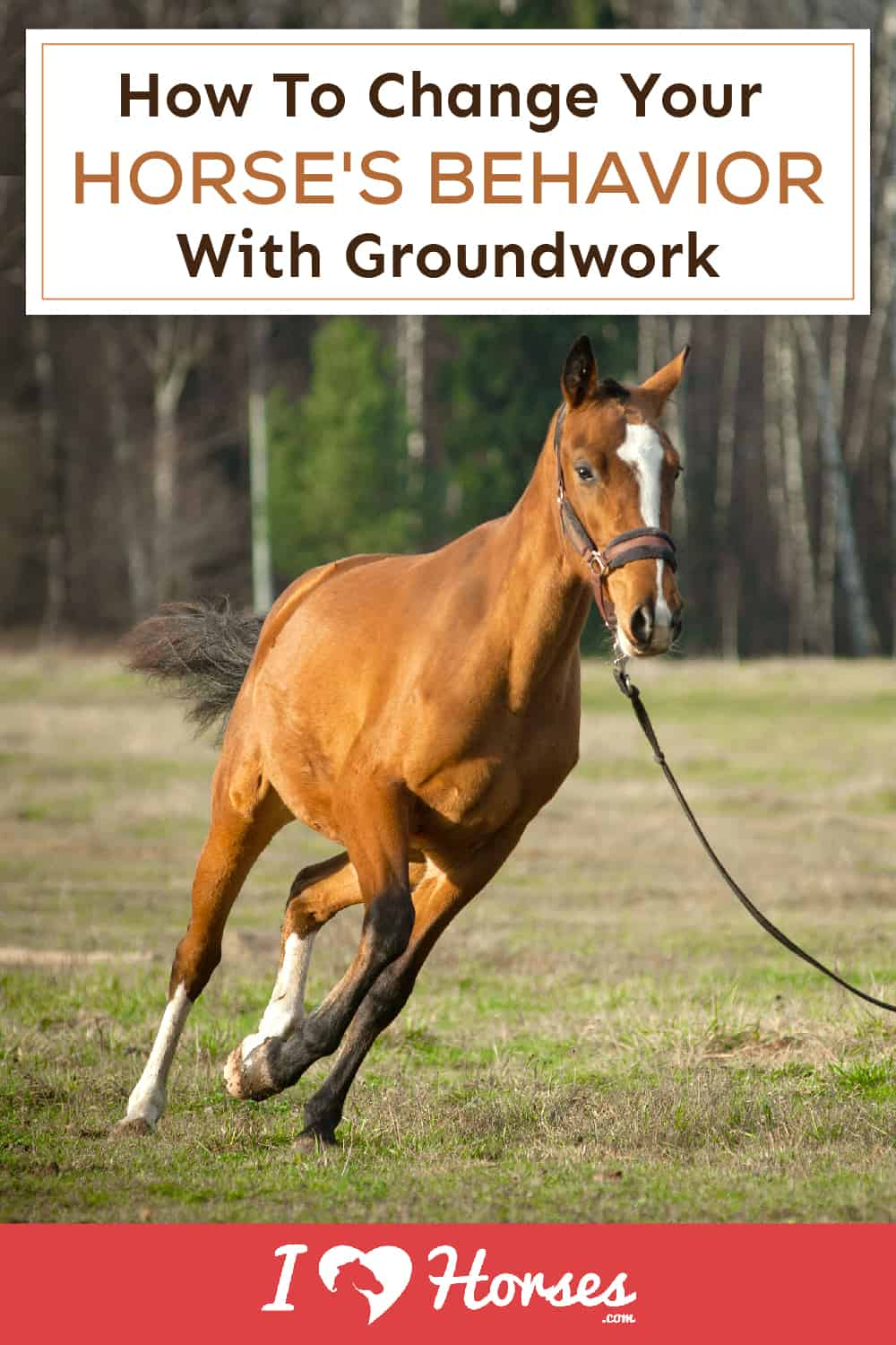 How To Use Groundwork To Change Horse Behavior