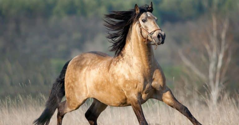 dun horse facts