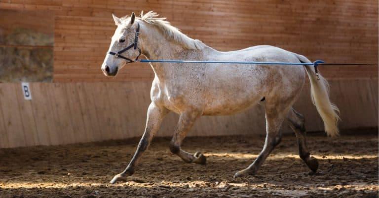 groundwork for horse behavior modification