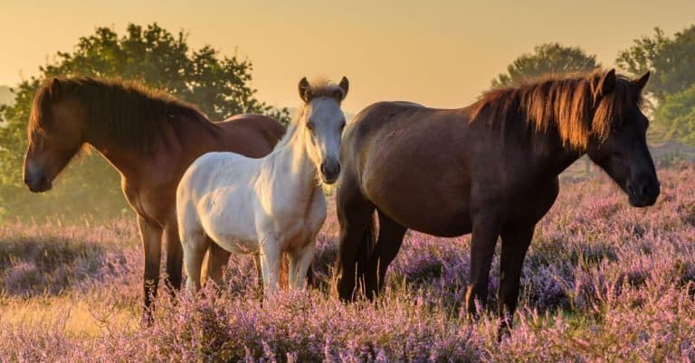 everything you need to consider when looking at horses for adoption
