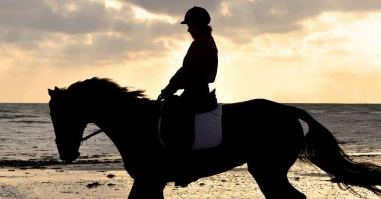 horse and rider on the beach
