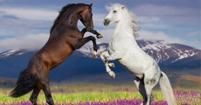 two equines