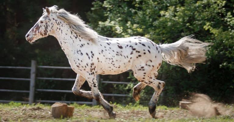 interesting horse facts you might not know
