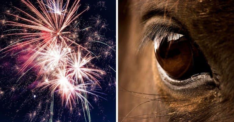 horse fireworks riverside county