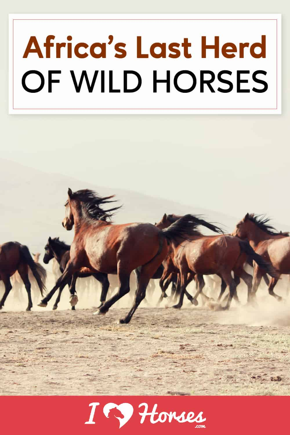 What You Need To Know About Africa's Horses