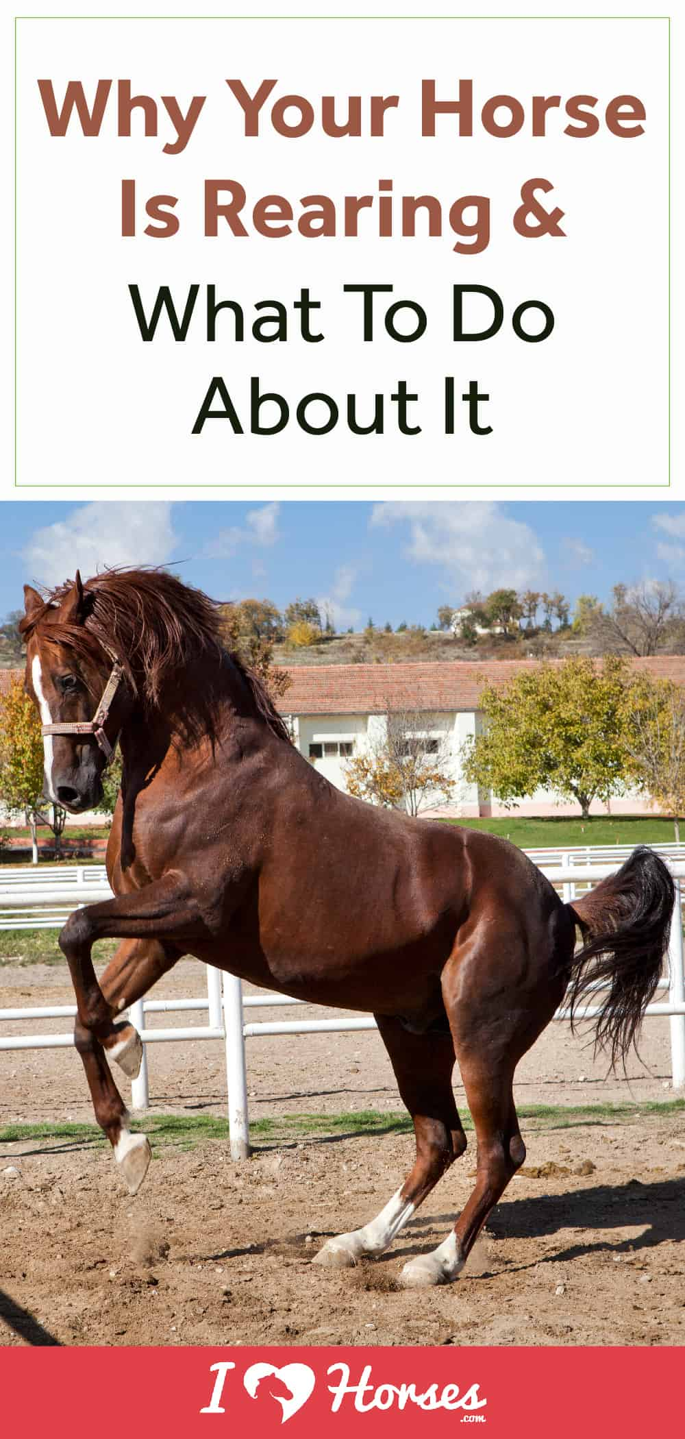 Why Is Your Horse Rearing