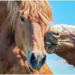 20 Horse Jokes To Make You Laugh