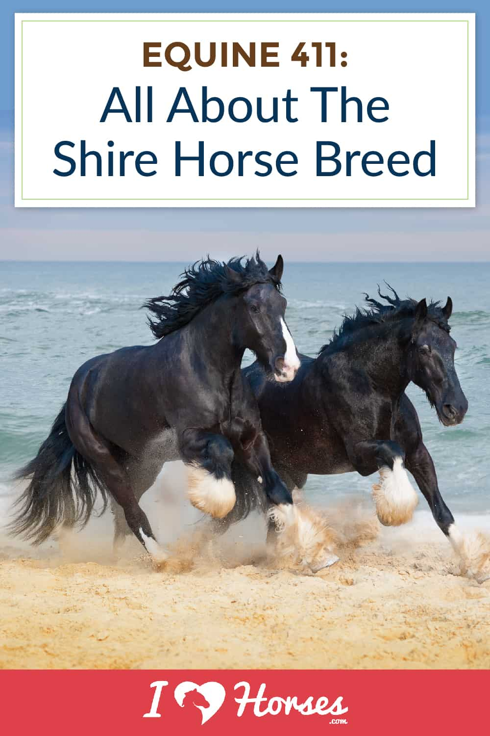 all about the shire horse