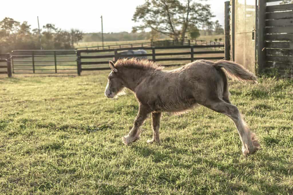 why horses often kick