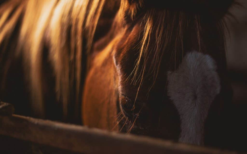 warning signs your horse is in pain