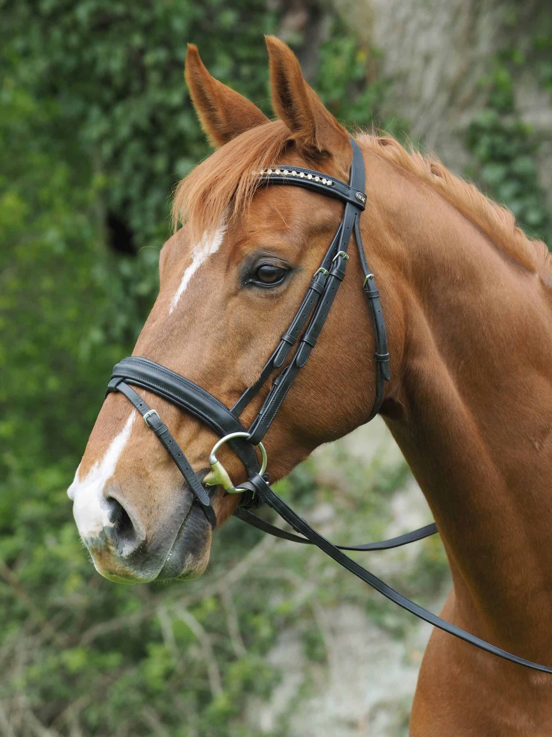 A head shot of a chestnut horse in a snaffle bridle.
