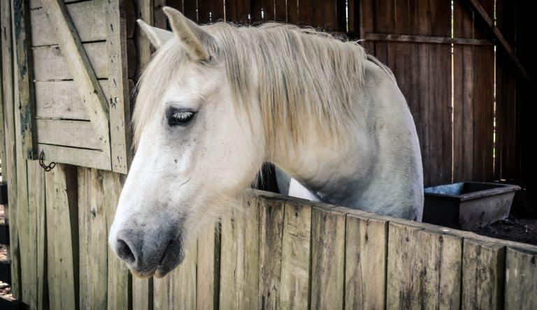 hidden dangers in your barn