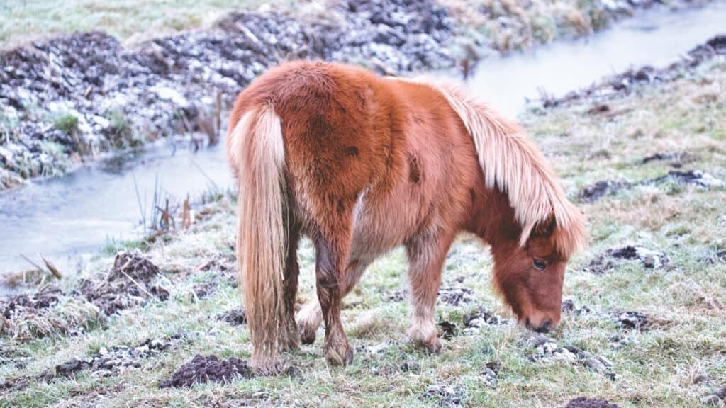 why do horses eat dirt?