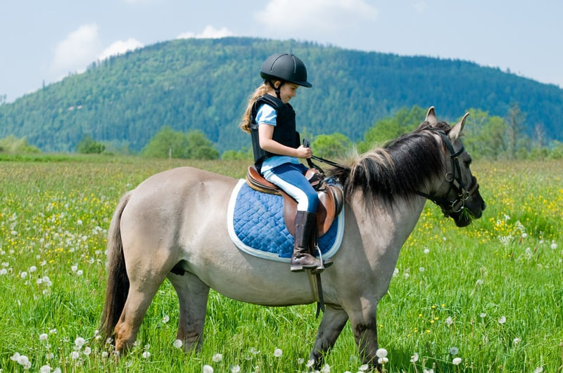 tips to get started in horseback riding