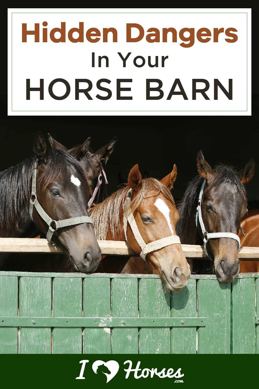 Hidden Dangers In Your Horse Barn-01-01