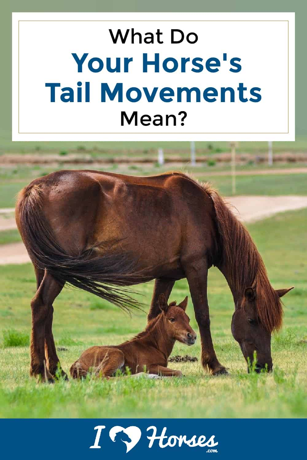 What Your Horse's Tail Movements Mean-02-02