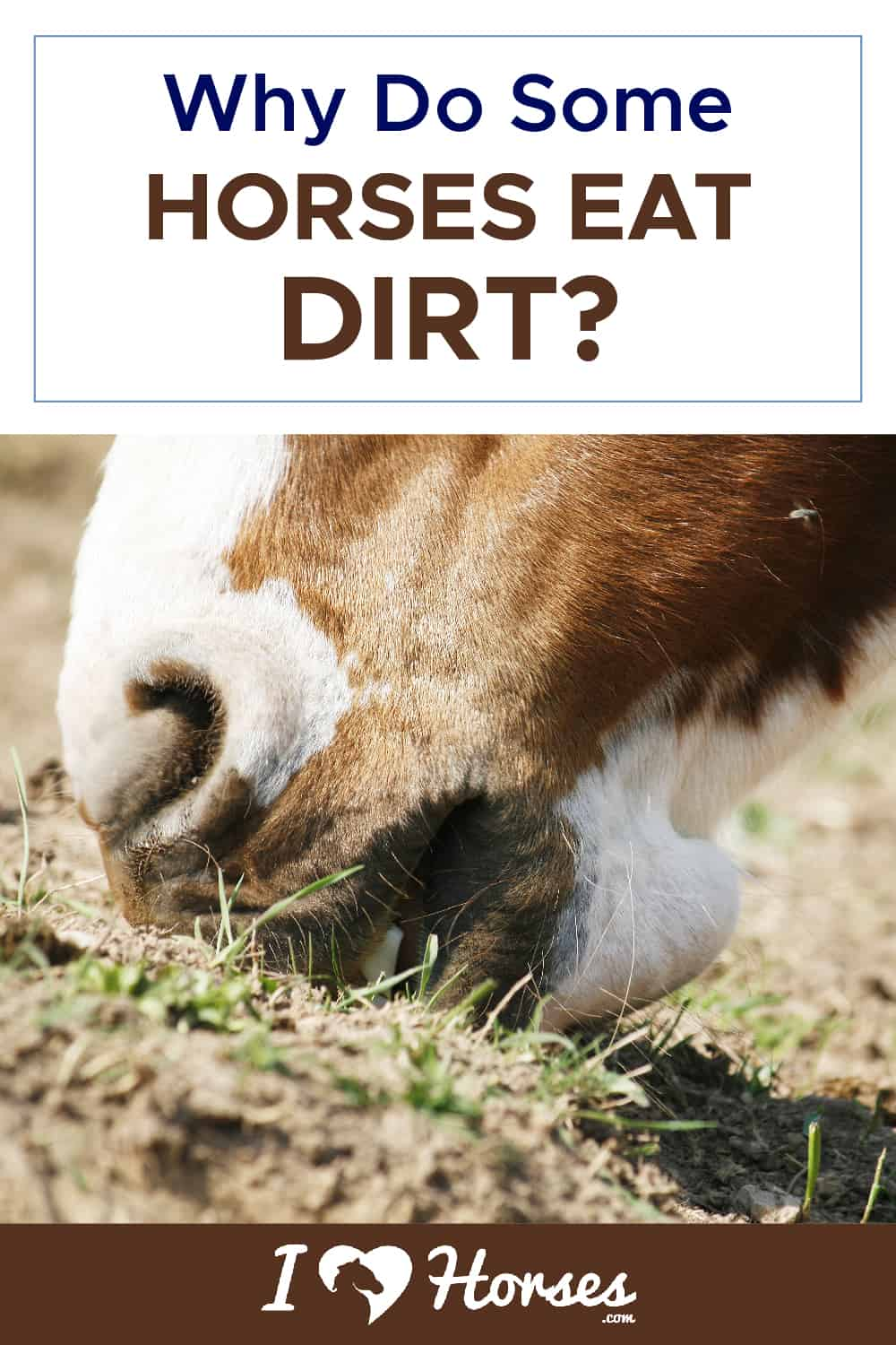 Why Do Some Horses Eat Dirt-01