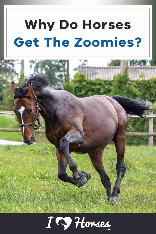 zoomies horse