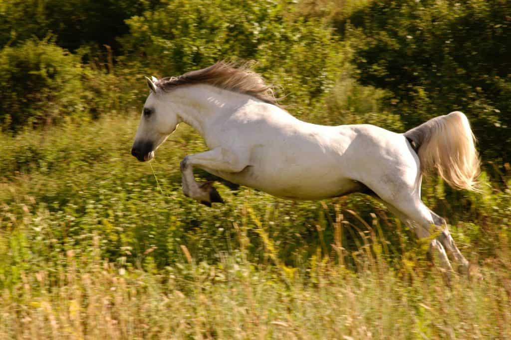 why horses kick and how to stop it