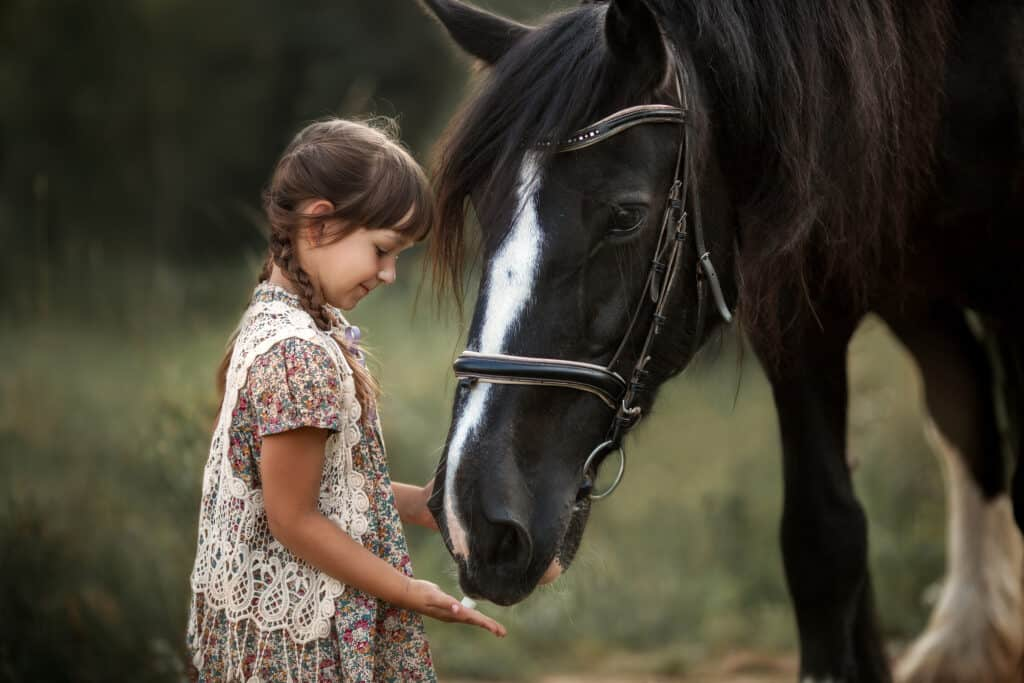 shire horse breed facts