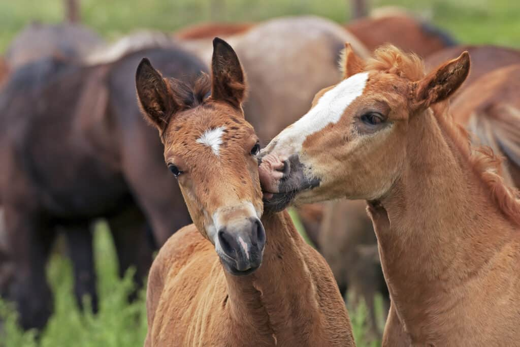 are horses capable of love