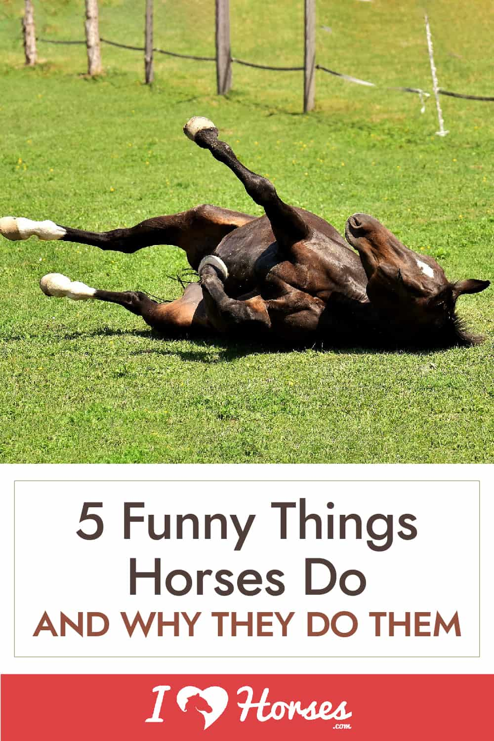 5 Funny Things Horses Do And Why They Do Them