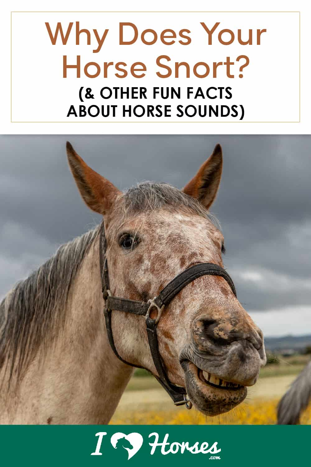 6 Common Horse Sounds & What They Mean