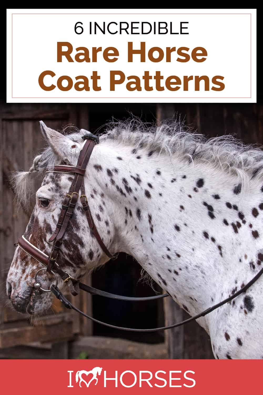 6 Rare Horse Coat Markings & Patterns