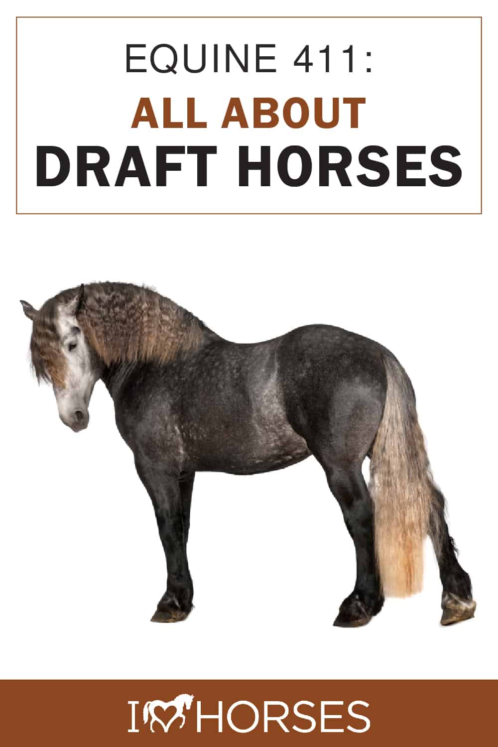 All About Draft Horses