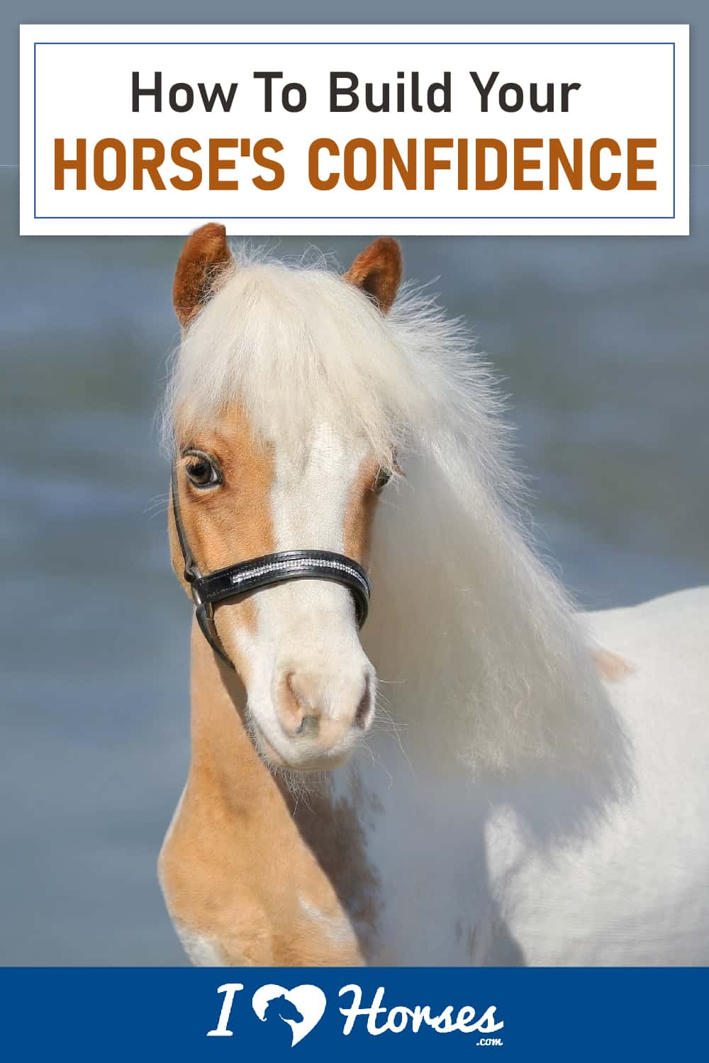 How To Build Your Horse's Confidence