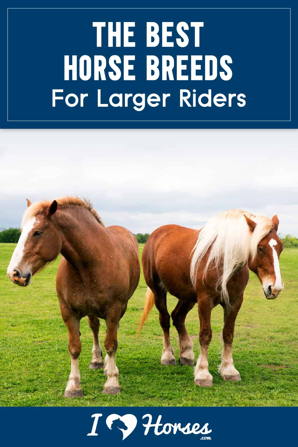 The Best Horse Breeds For Larger Riders