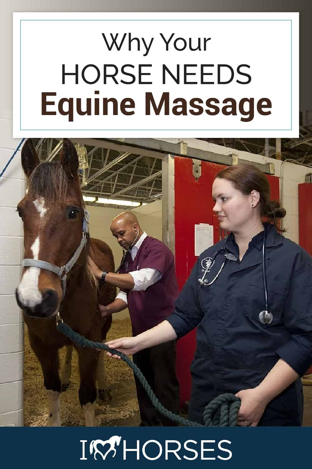 What Is Equine Massage