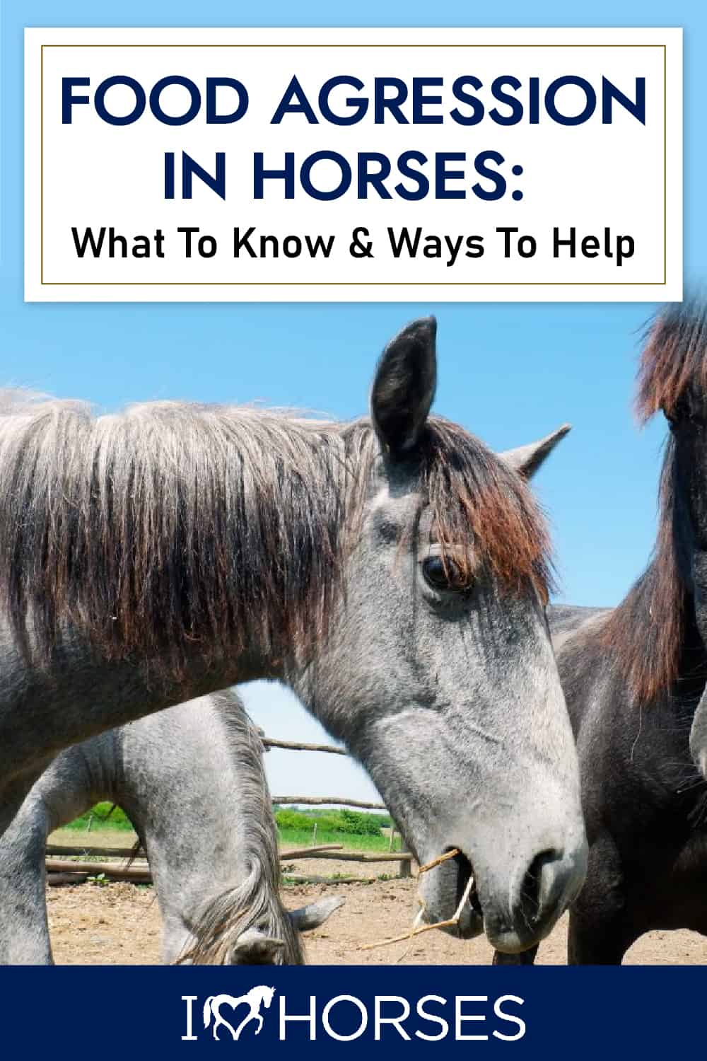 What You Need To Know About Food Agression In Horses