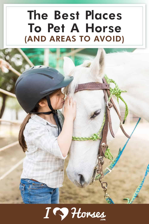 Where Should You Pet A Horse