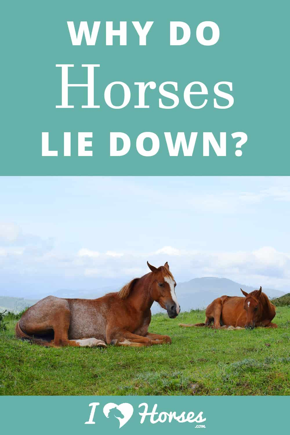 Why Does Your Horse Lie Down