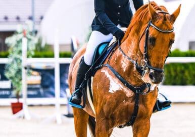 rare horse coat markings