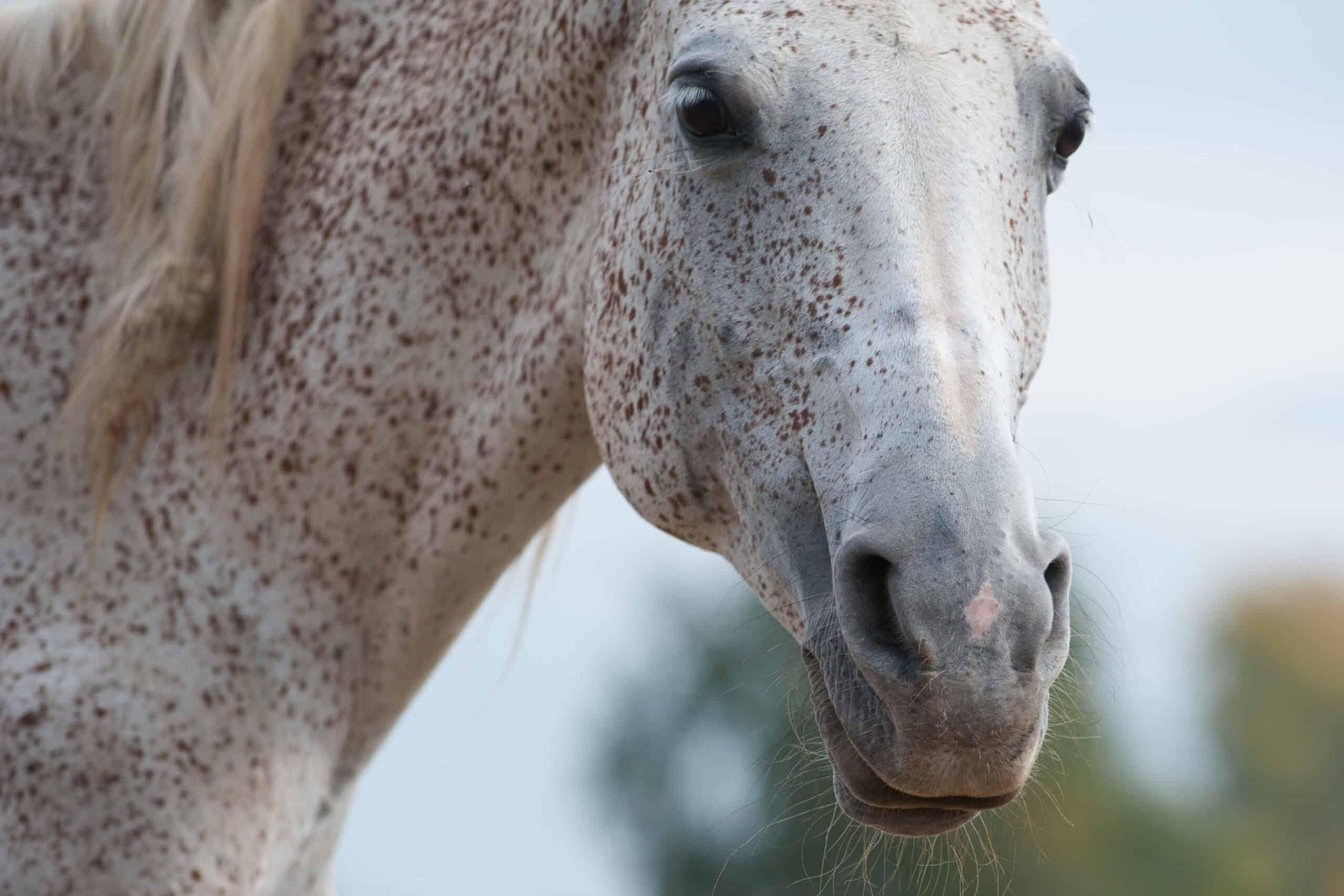 rare horse coat