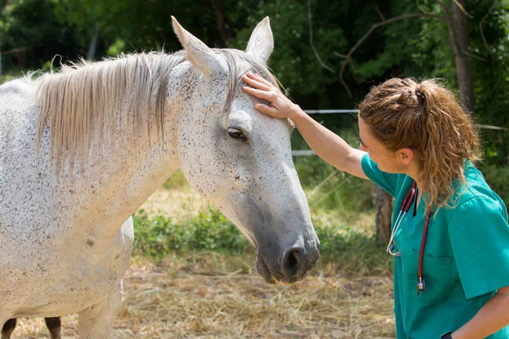 signs your horse has a fever