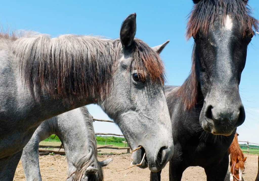 food aggression in horses