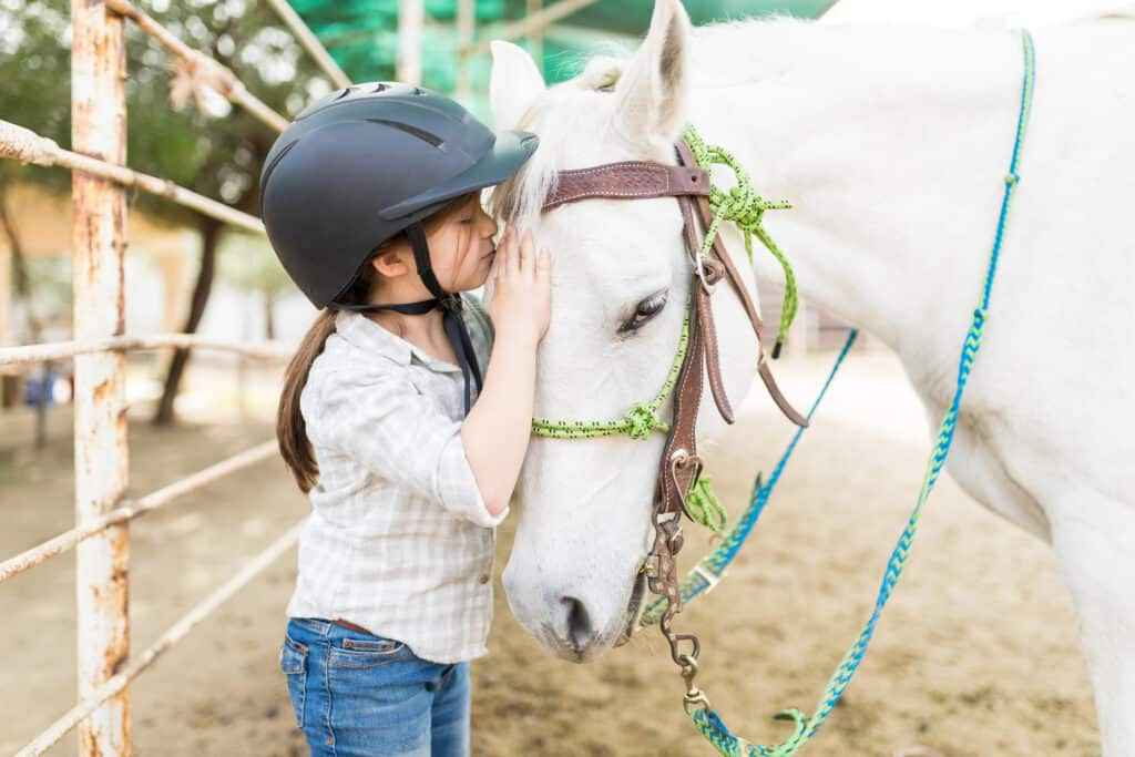 best places to pet a horse and areas to avoid