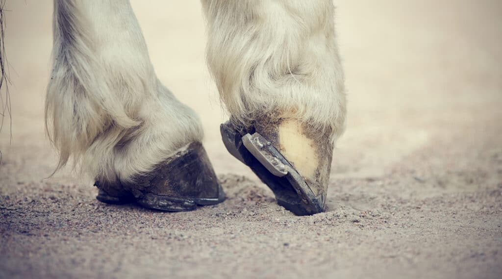 horseshoes and hoof care