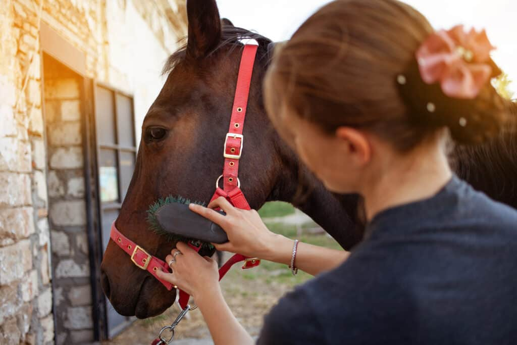 why you should talk to your horse every day