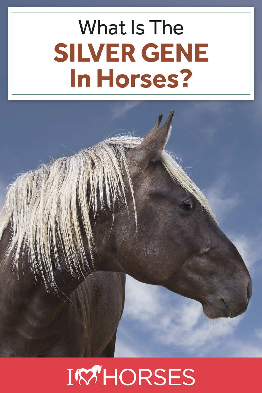 What Is The Silver Gene In Horses
