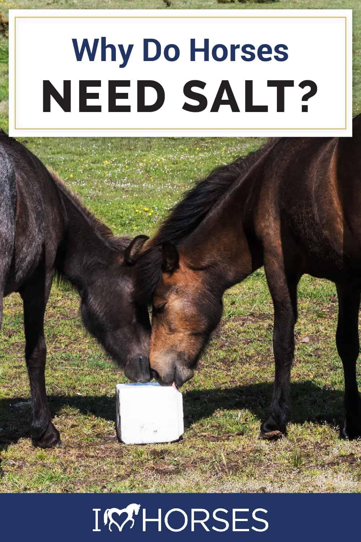 Why Do Horses Need Salt