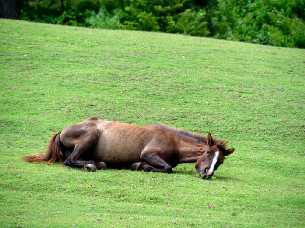 why do horses roll on their backs?